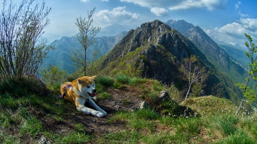 View of a dog on mountain