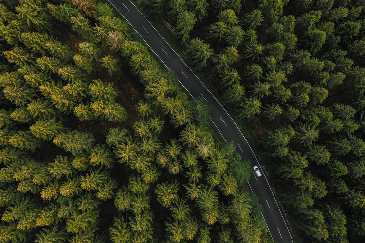 Aerial view of car driving through the forest on country road Autumn Cars Copy Space Country Curve Drone  Moving Nature Path Road Transportation Travel Tree View Aerial Aerial View Background Car Countryside Forest Germany Highway Landscape Outdoor Pine Tree