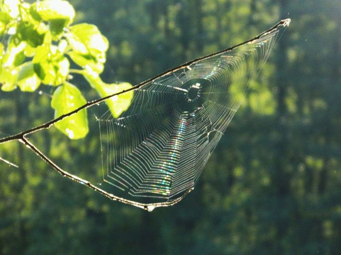 Spider Web Nature Beauty In Nature