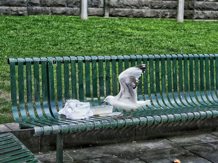 Seagull on bench by leftovers in container at park