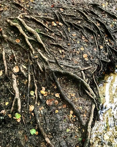Crawling in my veins Outdoors Textured  Tree Roots Nature Naturelovers Water River Photography Summer Hertford