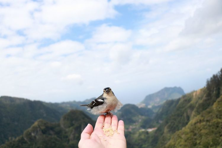 Bird EyeEm