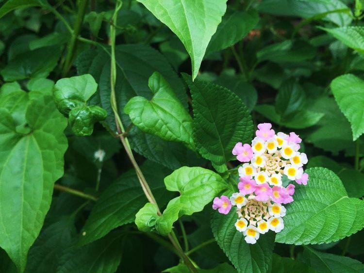 Flower Natural Beauty Taking Photos Frame It! Nature Green Beautiful Nature Enjoying Life Feel High