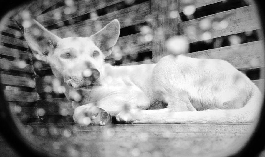 Authentic Moments Blackandwhite Eye4black&white  Eye4photography  Streetphotography I Love My Dog