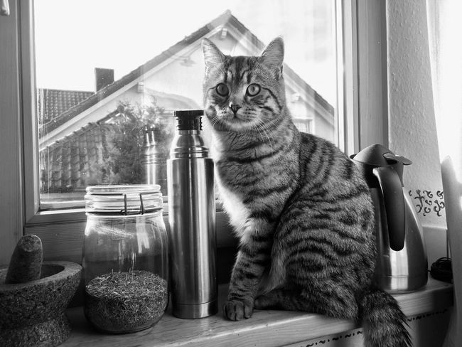 Light And Reflection Domestic Cat Pets Domestic Animals Window Feline Mammal One Animal Animal Themes Cat Sitting Indoors  Window Sill Full Length No People Blackandwhite Black And White Blackandwhite Photography Day