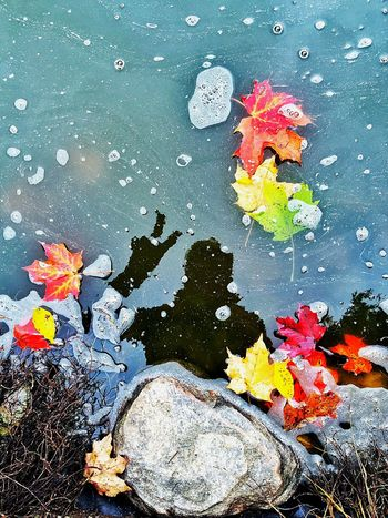 Water Reflections Reflection Autumn Fall Beauty Check This Out That's Me Eye4photography  EyeEm Best Shots EyeEm Gallery