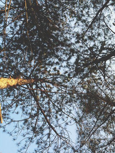 OpenEdit Vilkovo Nature Travel Landscape Firtree