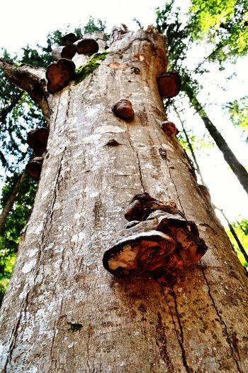 Textured  Tree Tree Trunk Wood - Material Nature Growth Mushroom