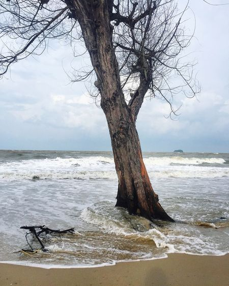 Tree and wave at beach Weather Storm Wind Thailand Flood Tide Rising Tide Hide Tide High Tide Sea Beach Water Nature Tree Sand Horizon Over Water Cloud - Sky Outdoors No People Day Beauty In Nature Wave Tranquility Scenics Tree Trunk Tranquil Scene Bare Tree Branch EyeEmNewHere