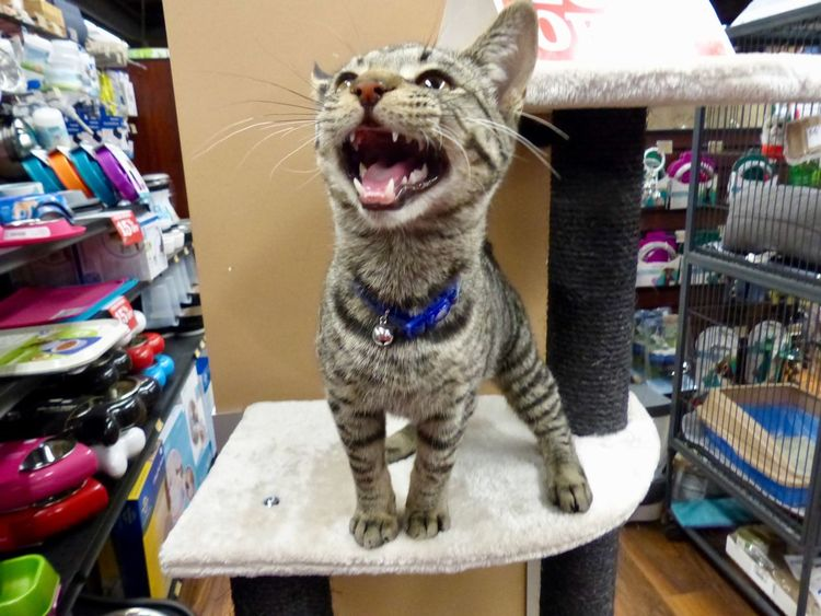 Rescue kitten found a good home 🏠 👍 Inside Crazy Funny Cats Noflash Photography Youtuber Youtube Youtubers :D Yeg Pets Fz200 Panasonic  Caturday Feline Cat Cute Rescue One Animal Indoors  Pets Animal Themes Sitting Domestic Animals Mammal No People Close-up