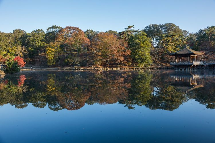 Nara Ukimidou Early Morning Nara Japan Sunrise Tree Water Symmetry Autumn Lake Reflection Sky Reflection Lake