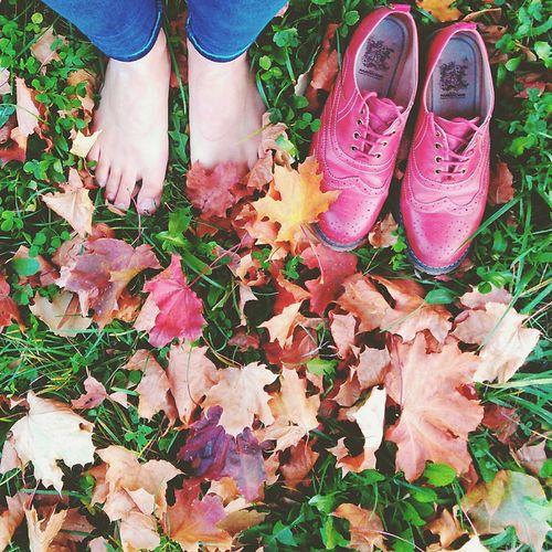 Первопроходцы осень сентябрь горит September Cold Hello World кленовые листья трава ножки