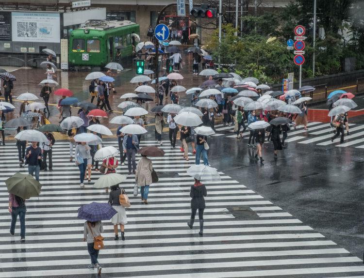 City City Life Crossing Japan Metropolitan People Rain Rainy Day Scrambled Shibuya Shibuya Crossing Street Tokyo Umbrella Walking Wet Zebra Crossing