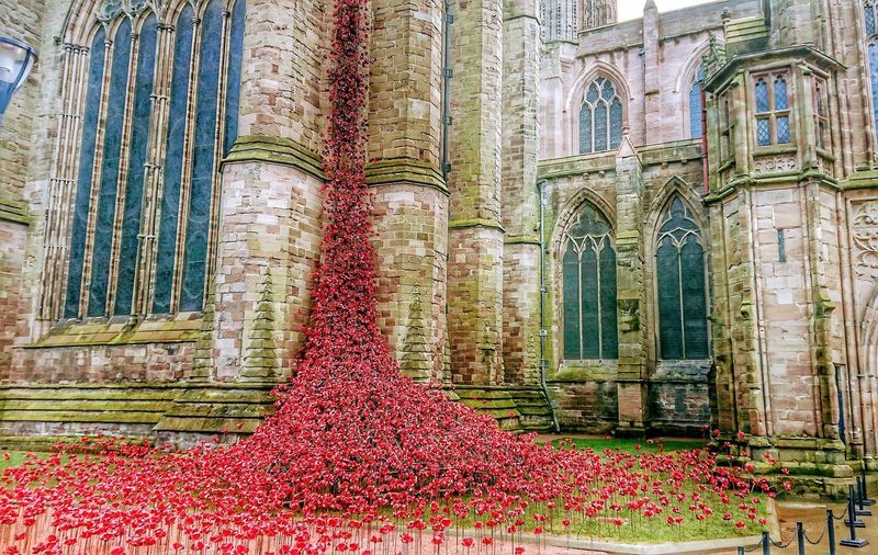 Hereford Cathedral Poppies Window Architecture Building Exterior Built Structure Close-up