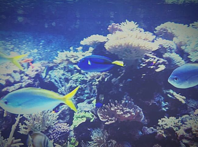 Fish Ocean Deep Blue Sea Nature