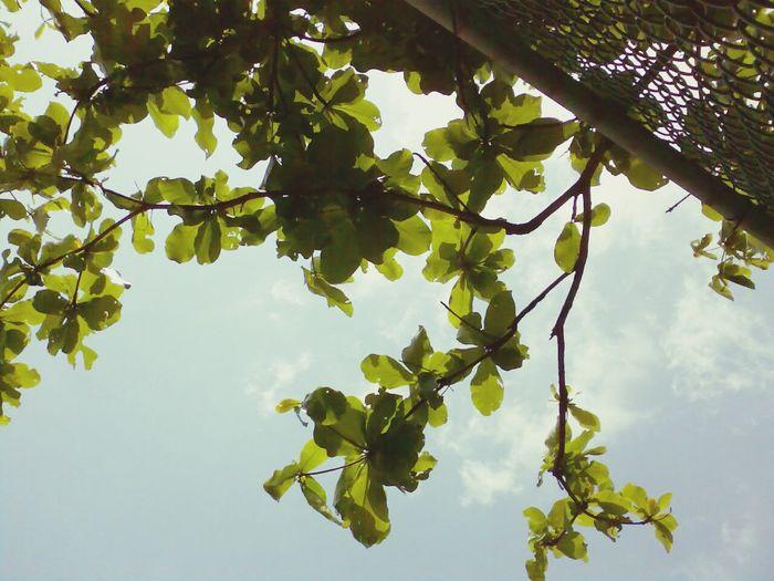故事終於落幕了 Sky_collection Trees LeavesMemories Good Bye