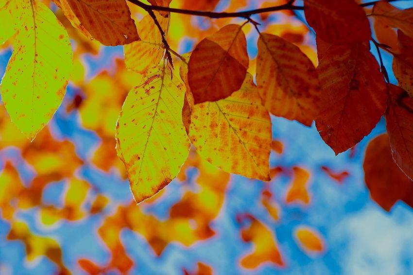 Autumn Leaf Nature Multi Colored Tree Autumn Collection