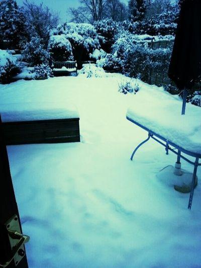 My Boyfriend Garden, Maidenhead. England