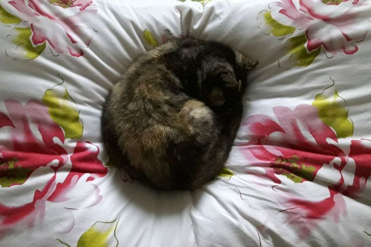 High angle view of cat relaxing on bed
