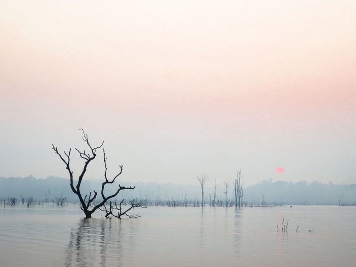Bare Tree Beauty In Nature Day Lake Laos Nature No People Outdoors Sky Tranquil Scene Tranquility Tree Water