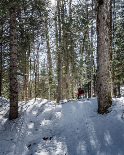 Man against trees in forest during winter