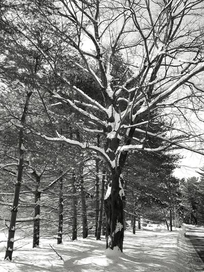 Tree Nature Growth Outdoors Winter Day Sky Snow Roadside Tree Cold Temperature Snow Covered Landscape Black And White Black And White Photography Black&white EyeEm Best Shots - Black + White