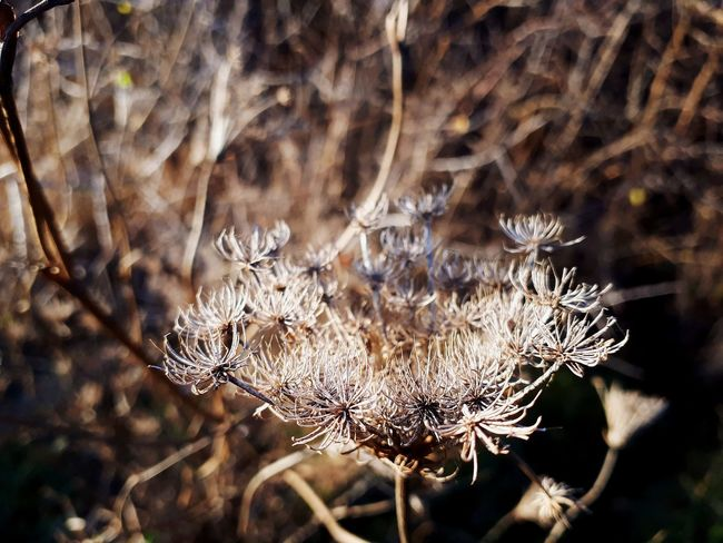 Sunshine Close-up Plant Wilted Plant Dried Plant Dead Plant Dry Wilted Dried