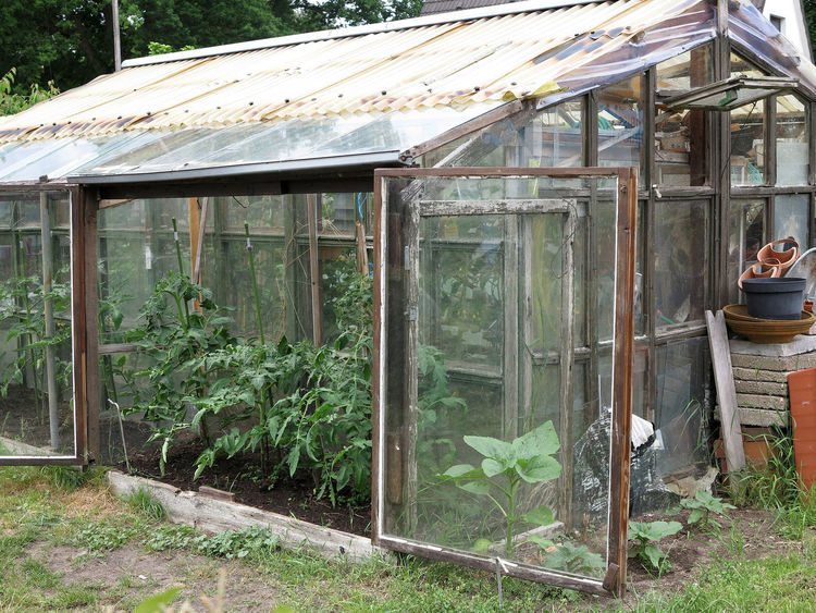 Old wooden greenhouse with tomato plants Abandoned Architecture Building Building Exterior Built Structure Garden Glass - Material Green Color Greenhouse Growth House Land Nature No People Old Open Outdoors Plant Tomato Transparent Tree Window Wood - Material