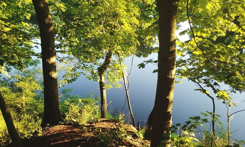 Duke Island Park Nature Tree Outdoors Tranquility Beauty In Nature River Peaceful View Nj Trishann Artlovelaughter