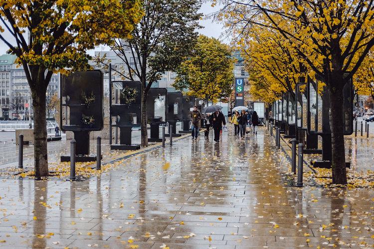 Pavement Autumn