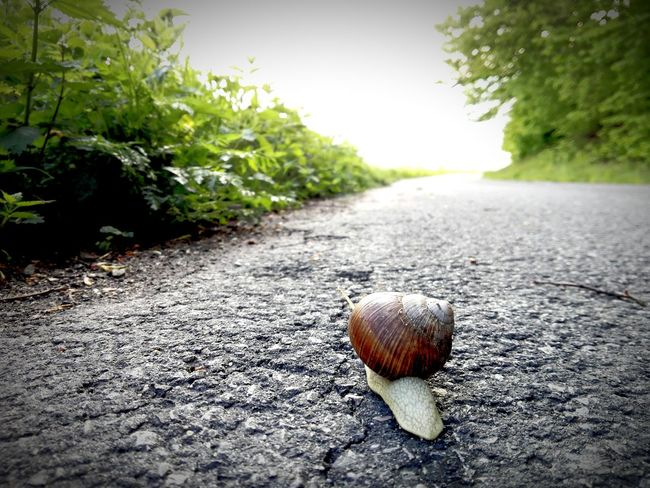 Road Sunny Day Sky Outdoors Snail Snails🐌 Snail ❤ Nature Animal Beauty In Nature Green Shell