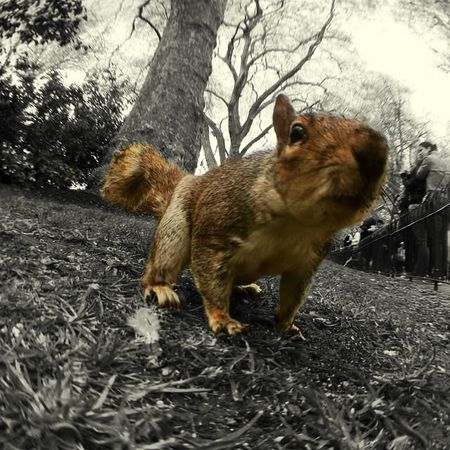 Capture The Moment Squirrel Onlymobilephoto Fisheye FishEyeEm Park London IPhoneography Iphone5s