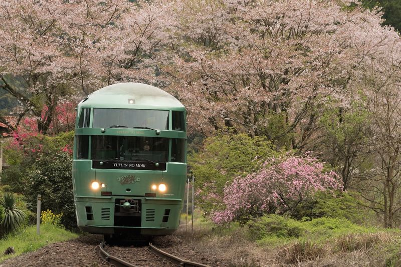 Japan Cherry Blossoms Train Train Station My Favorite Place Flowers EyeEm Flower Eyeem Spring Traveling Home For The Holidays