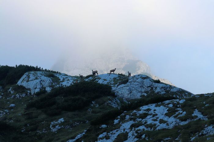 chamois in the mountains, Slovenia Animals Beauty In Nature Chamois Day Fog Landscape Mountain Mountain Goats Nature No People Outdoors Rock - Object Scenics Sky Tranquility
