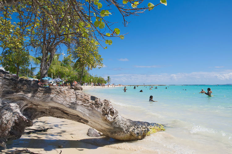 Tropical beach of Sainte Anne - Caribbean Sea - Guadeloupe tropical island Anse Antilles Atlantic Bay Beach Beauty In Nature Caribbean Caribbean Sea Day Guadeloupe Horizon Over Water Landscape Nature Ocean Outdoors Paradise Sainte-anne Scenics Sea Seascape Shore Shoreline Sky Tropical Water