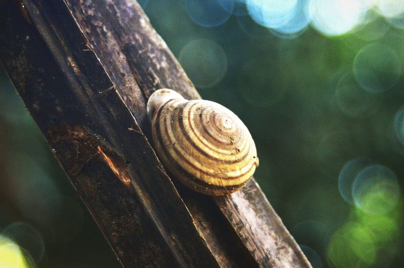 Close-up of snail on wooden log