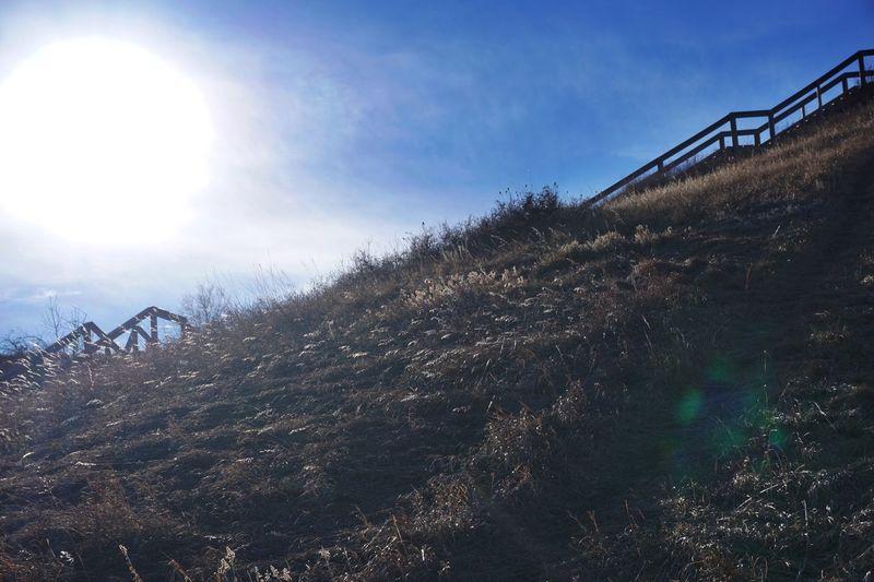 EyeEm Best Shots Welcomeweekly Eyemphotography Clouds And Sky Showcase: February Alberta Canada Dry Grass Landscape_photography Steps Sunshine Winter Bushes Hillside