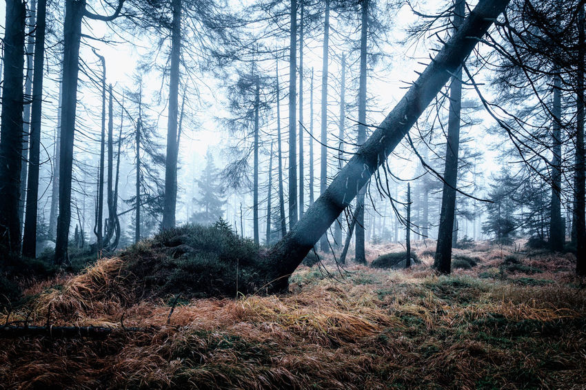Forest Tree Land Plant Trunk Tree Trunk WoodLand Nature Environment Non-urban Scene Forest Fire Growth Beauty In Nature No People Smoke - Physical Structure Tranquil Scene Environmental Issues Day Burning Fire Outdoors Evergreen Tree Pine Tree Pine Woodland Coniferous Tree