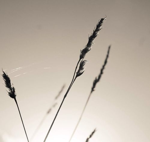 Plants Silhouette Nature Monochrome