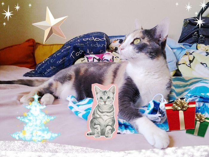 Sara quer um irmãozinho de Natal, mas seus avôs não deixam. Pet