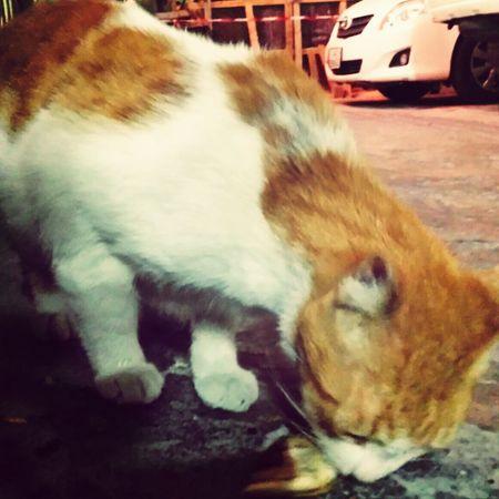 Catstagram Cat Catsofinstagram Catcat