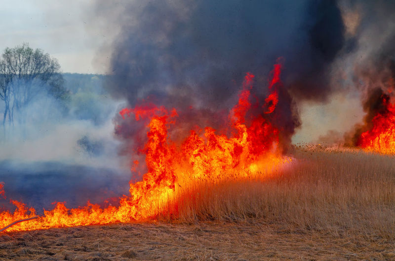 Panoramic view of fire on land