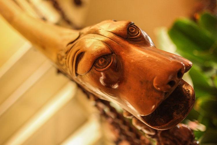 Railing wood dog Dog Halloween Wood - Material Gargoyle Eyes Animal Head  Animal Eye Animal Themes Railing Pasamanos