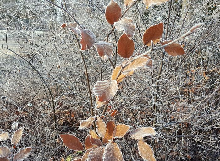 AntiM Beauty In Nature Close-up Day Field Fragility Freshness Frozen Leaves Frozen Nature Growth Leaf Nature No People Orange Color Outdoors Plant With Snow