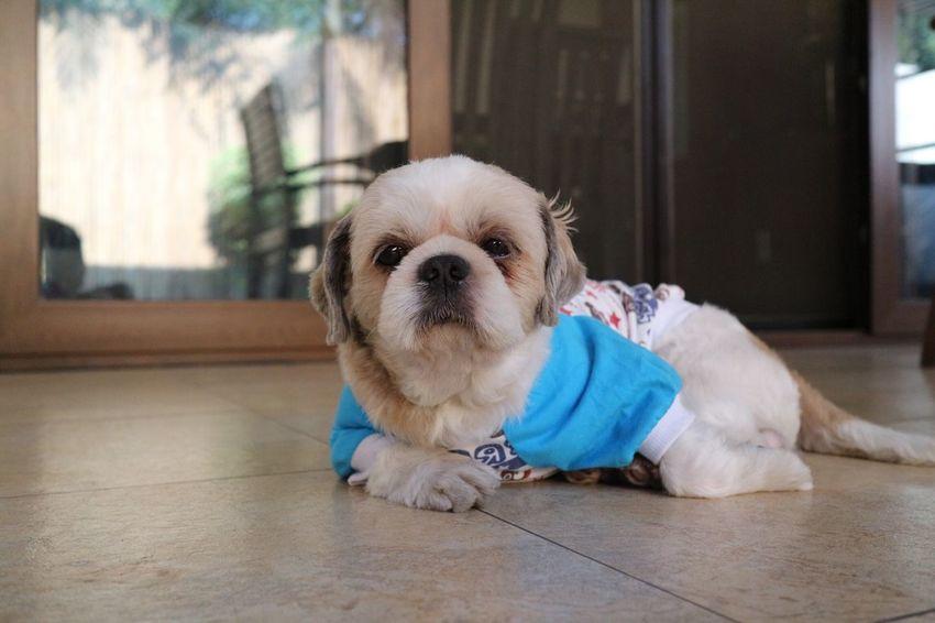 50 Lap Dog Hd Bilder Authentische Bilder Auf Eyeem Herunterladen