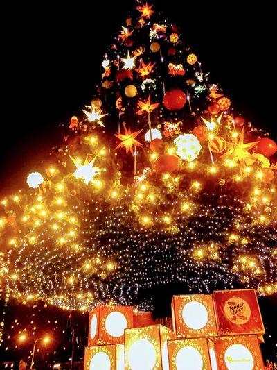 Giant Christmas Tree Night Christmas Illuminated Celebration Christmas Tree Christmas Decoration Christmas Lights Christmas Ornament Tree Tradition No People