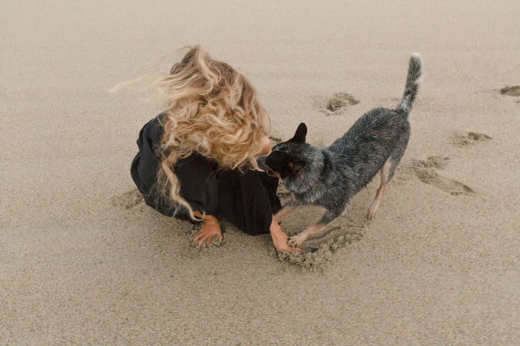 Abstract Animal Beach Day Dog Domestic Land Mammal Nature Outdoors Playing Sand