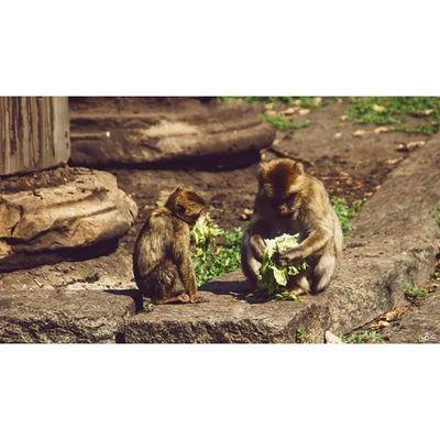 Sweet little monkey. Michaellangerfotografie CripixtMovement Fotografie Animal Photography Photographyislife Calvinize