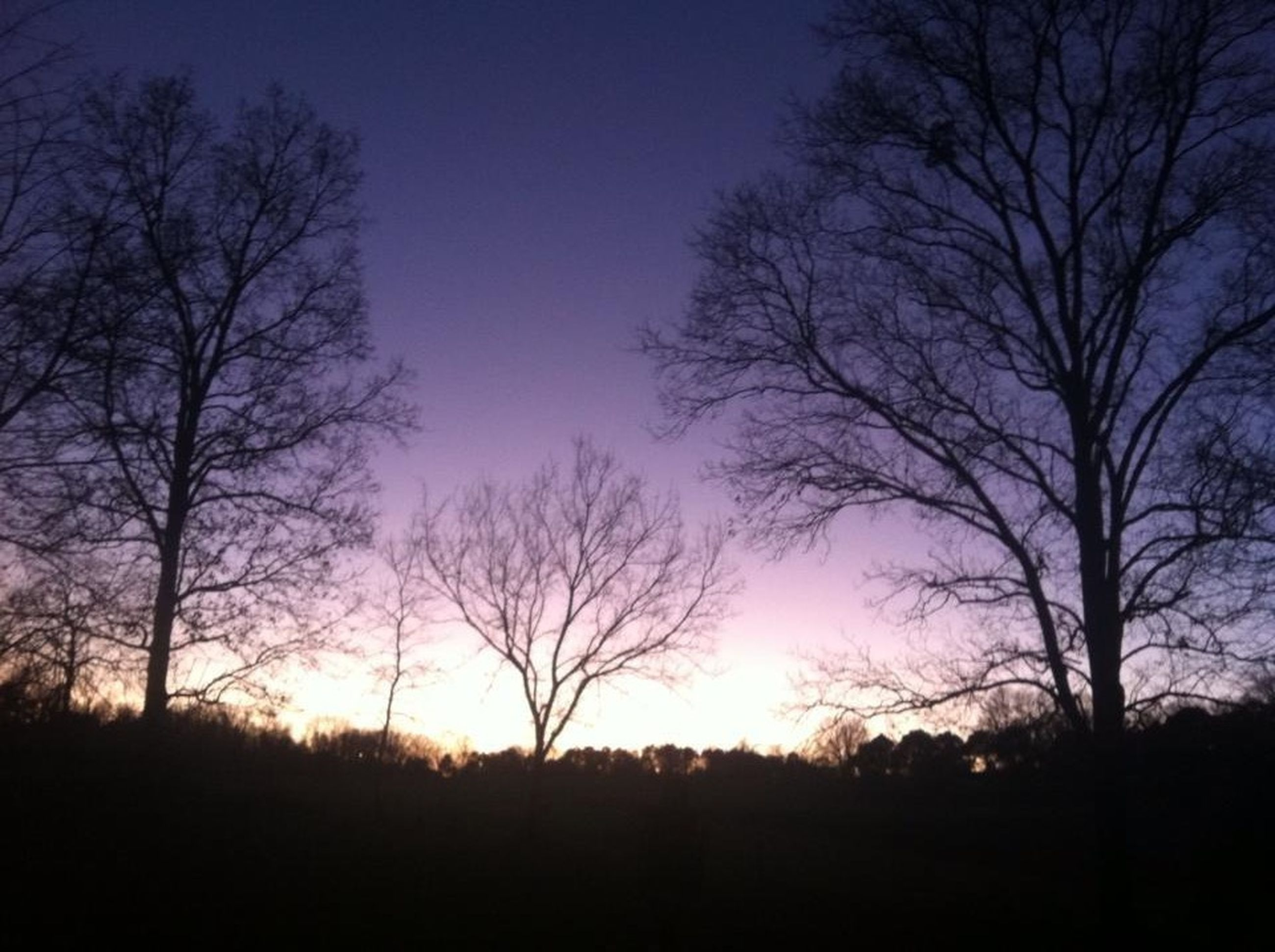 tree, bare tree, silhouette, branch, tranquility, tranquil scene, beauty in nature, scenics, nature, sunset, sky, low angle view, tree trunk, growth, dusk, clear sky, sun, idyllic, outdoors, no people
