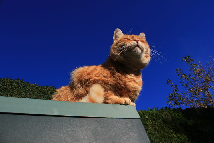 Happy cat Animal Themes Cat Close-up Day Ginger Cat Mammal No People One Animal Outdoors Sky Sunbathing Cat